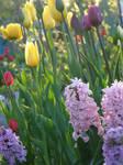 My garden by silvern-geo