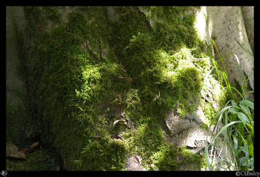 Moss on a Tree by Chalouba