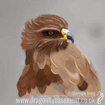 Tawny-eagle-painting by Chalouba