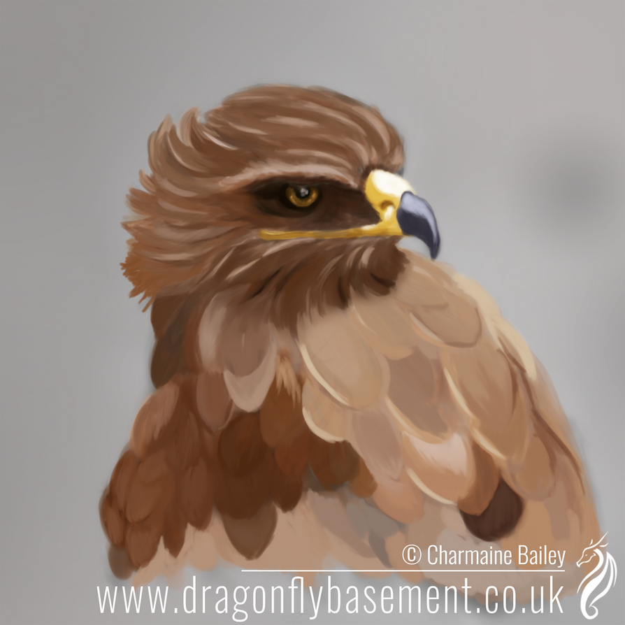 Tawny-eagle-painting by Chalouba