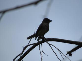 Bird 4 by kaytbear