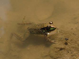 Frog (1?) by kaytbear