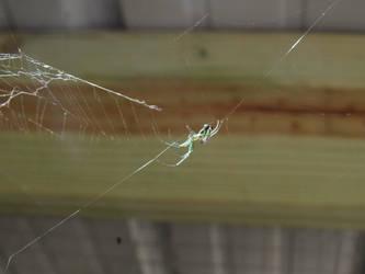 Little spider by kaytbear