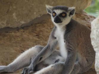 Zoo animal 2 by kaytbear
