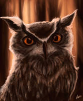 Owly by Virren