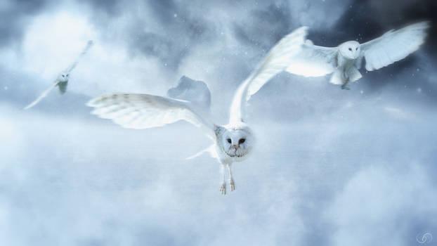 The Silent Flight of an Owl