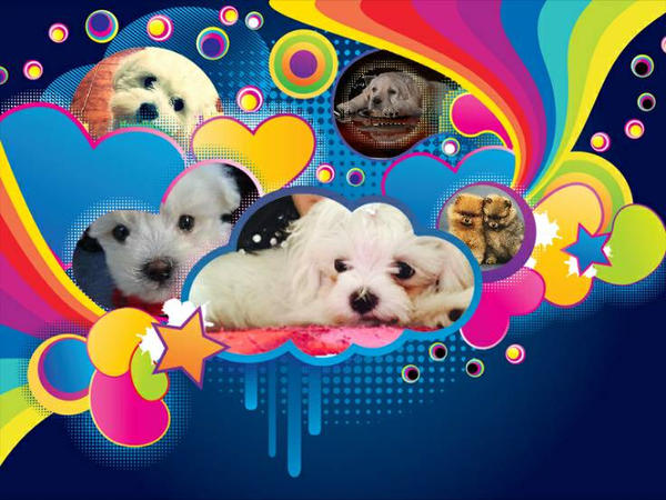 Cute Dog Collage Wallpaper By Helina01 On Deviantart