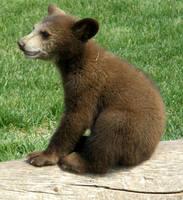 It's a bear by luckymirai