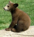 It's a bear