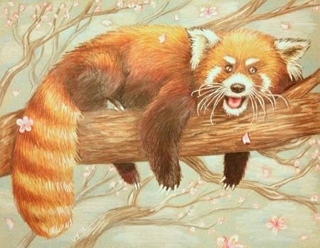Red Panda Pencil
