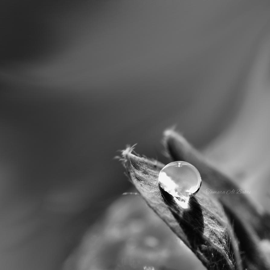 Frozen in the Wind by dandelion-field
