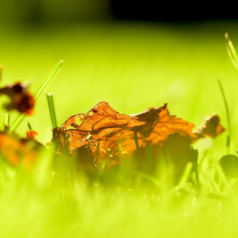 On Fire. by dandelion-field