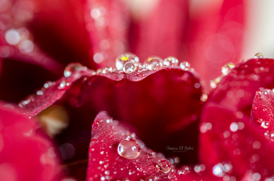 Glittery by dandelion-field