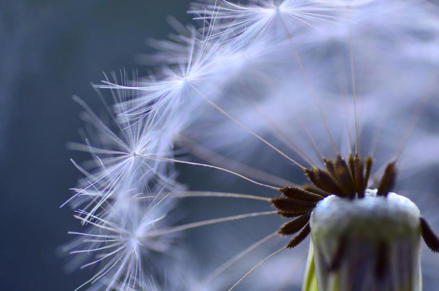 Small World by dandelion-field
