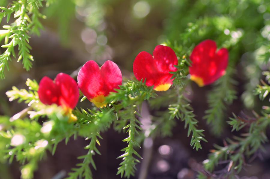 Little Hearts by dandelion-field