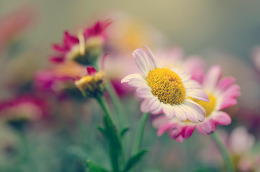 Spring's Flowers by dandelion-field