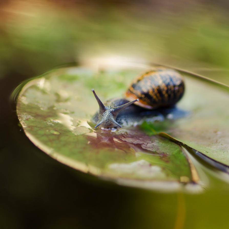 Snailing by dandelion-field