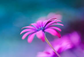 Springtide by dandelion-field