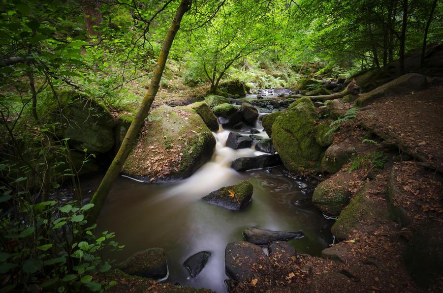 Wyming Brook by dandelion-field