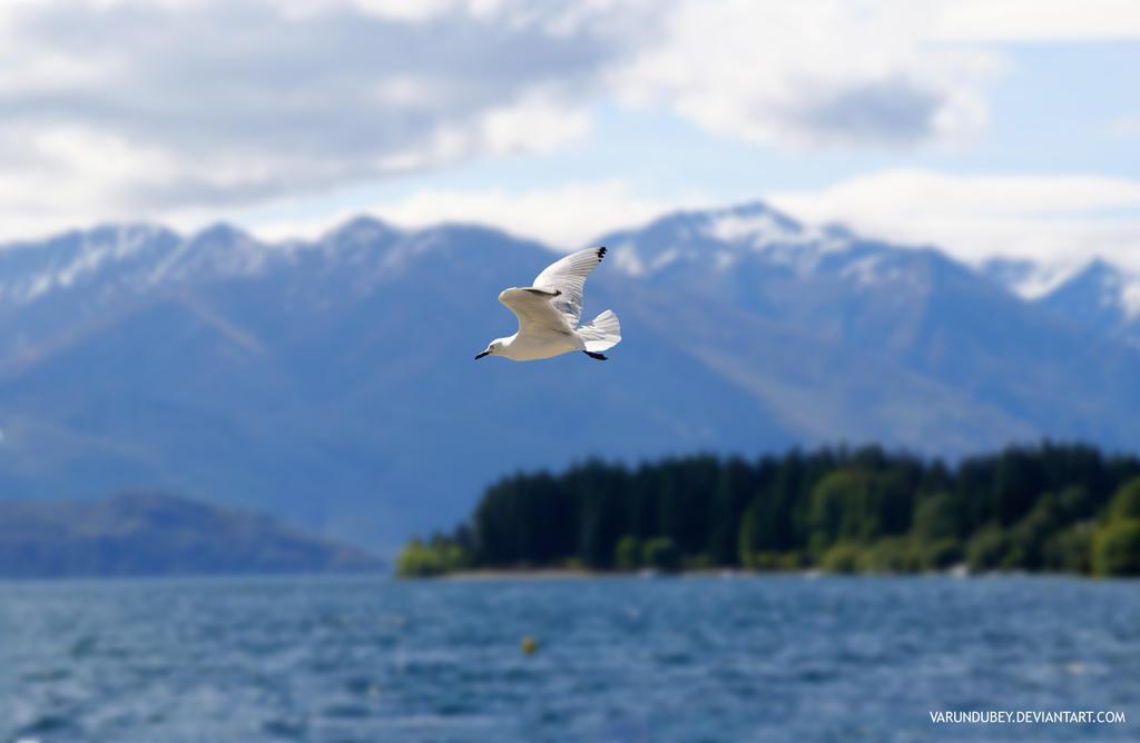 Seagull by varundubey