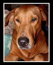 R.I.P My beloved puppy by shadowgearx