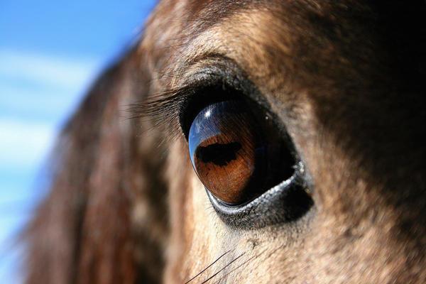 Afbeeldingsresultaat voor horse eye