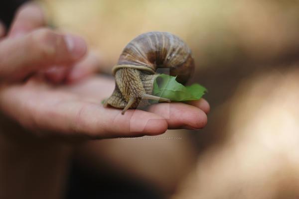 snail by Dobromydrova