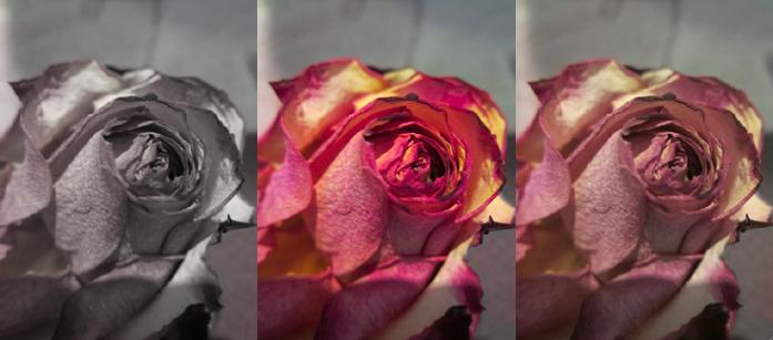 roses by Anna-Viktoria
