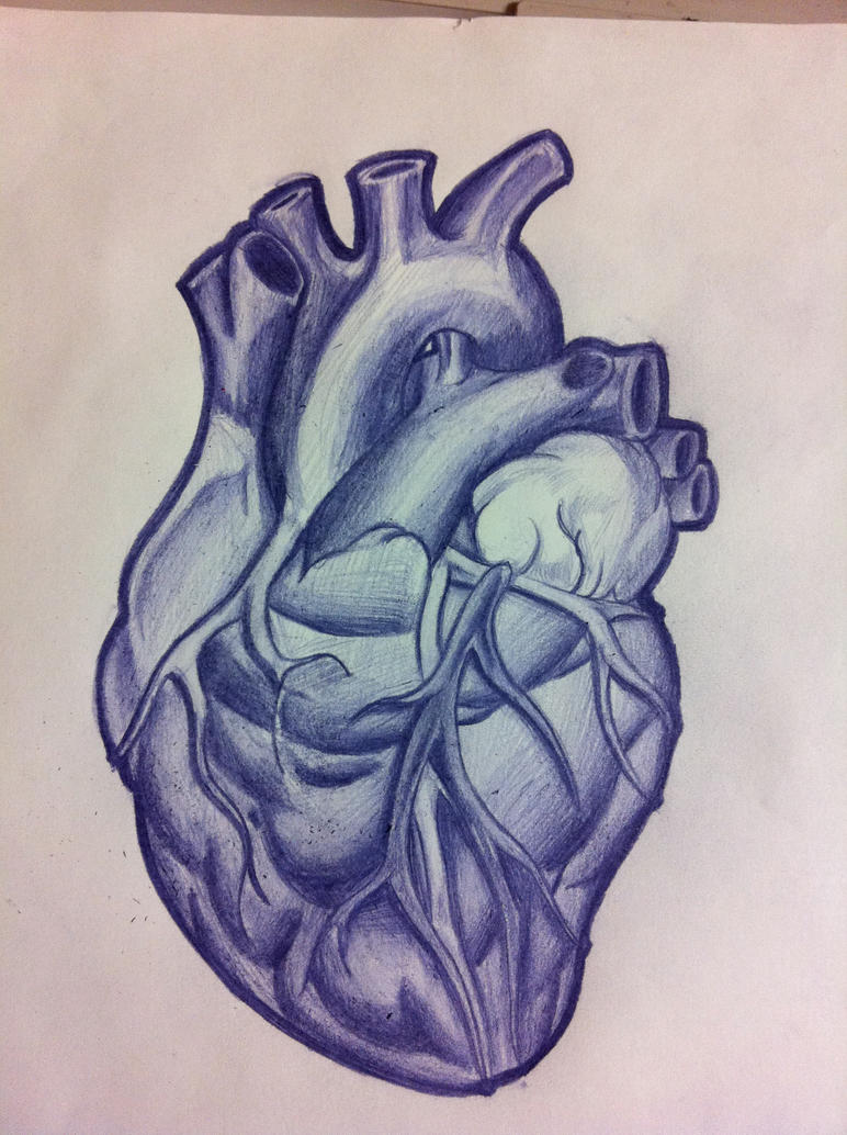 Anatomical Heart Tattoo by TricomiArt on DeviantArt