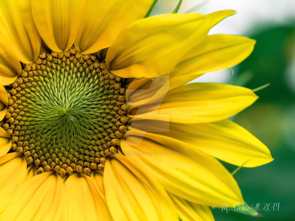 Yellow-ab-363695