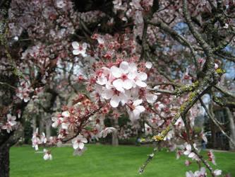 Flowers on campus by MasterswordsmanLink