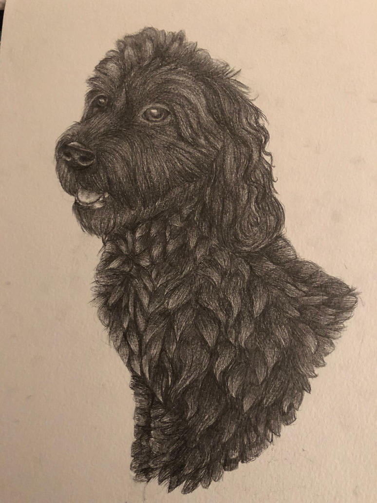 Rory | Labradoodle commission by Cosmic-Cola