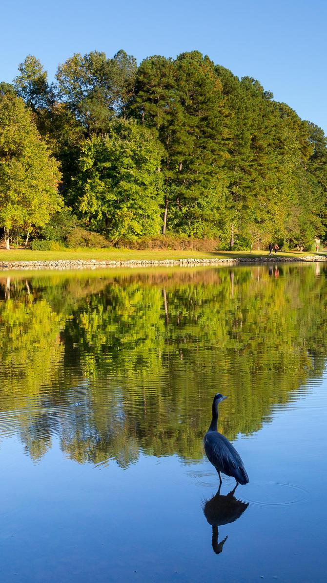 Heron at the lake by FrenchieSmalls