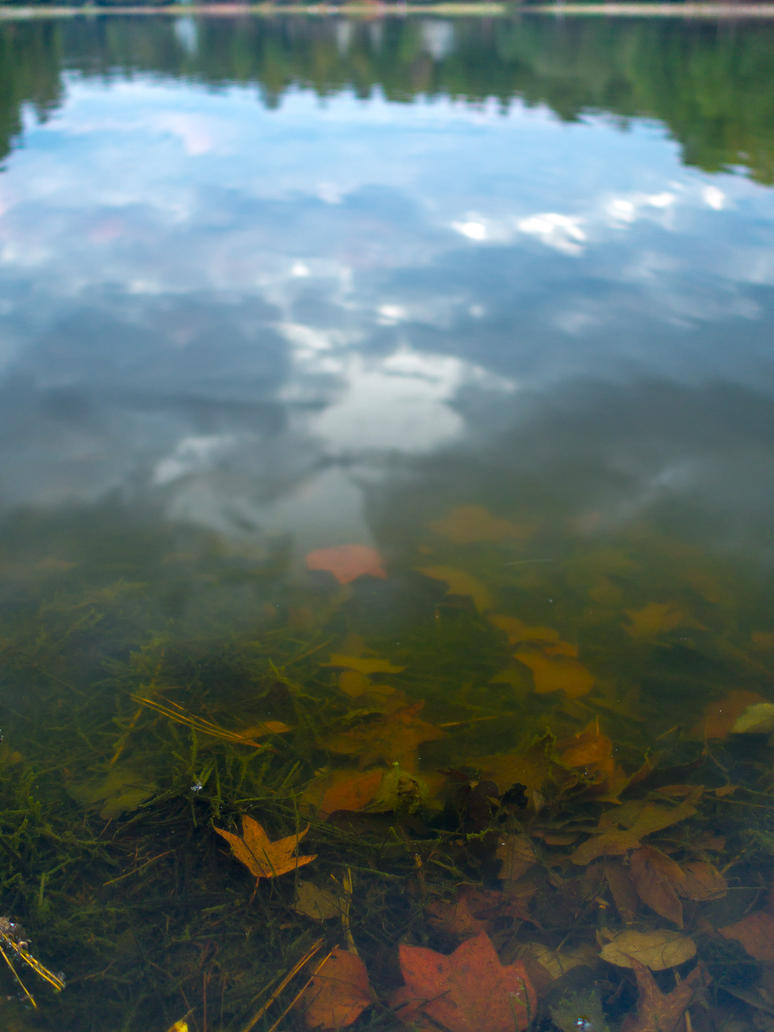 Lake leaves by FrenchieSmalls