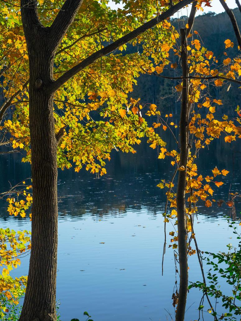 Fall at Lake Johnson #2 by FrenchieSmalls