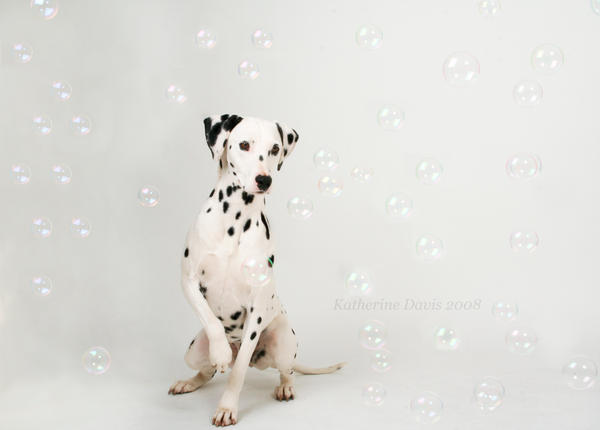 Steffi and Bubbles II by KatherineDavis
