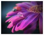 Purple Drop by KatherineDavis