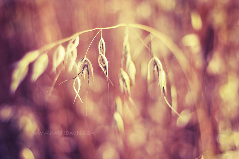 Grass by KatherineDavis
