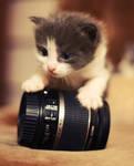 Lens Kitty