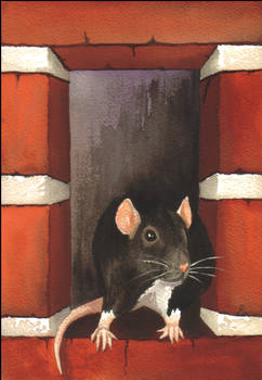 Rat In A Hole