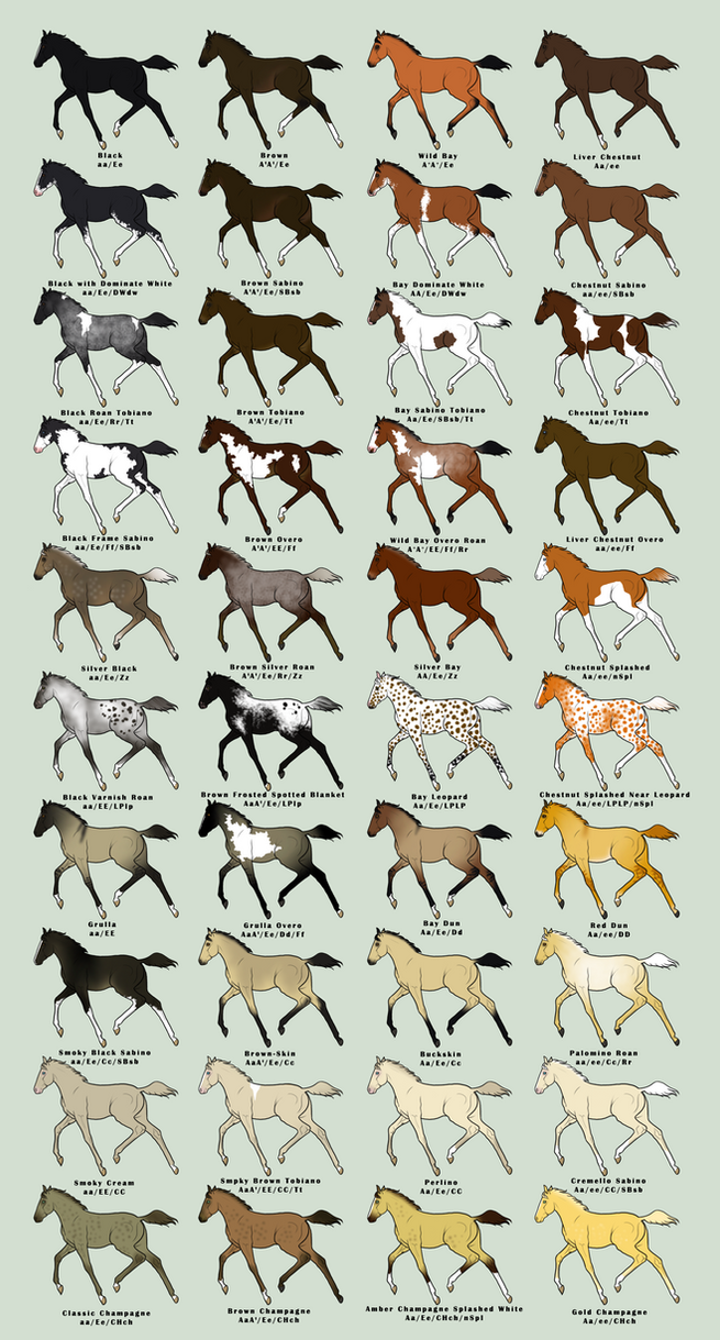 mustang_foal_imports_by_jnferrigno-d30tdcx.png