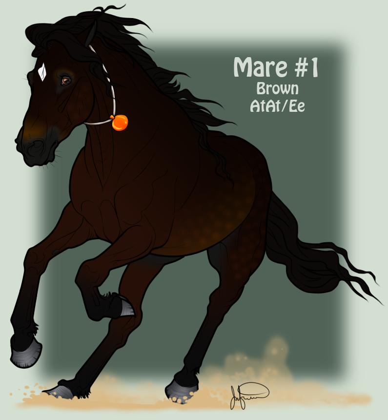 Mustang Mare Adoption 1 by JNFerrigno