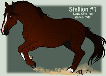 Mustang Stallion Adoption 1