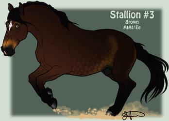 Mustang Stallion Adoption 3