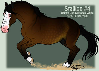 Mustang Stallion Adoption 4