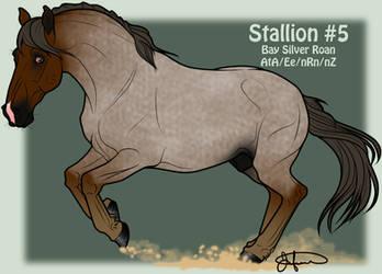 Mustang Stallion Adoption 5