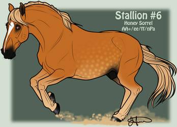 Mustang Stallion Adoption 6