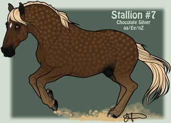 Mustang Stallion Adoption 7