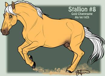 Mustang Stallion Adoption 8