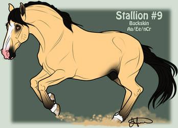 Mustang Stallion Adoption 9